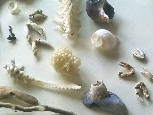 Icelandic ephemera. Beach combing finds