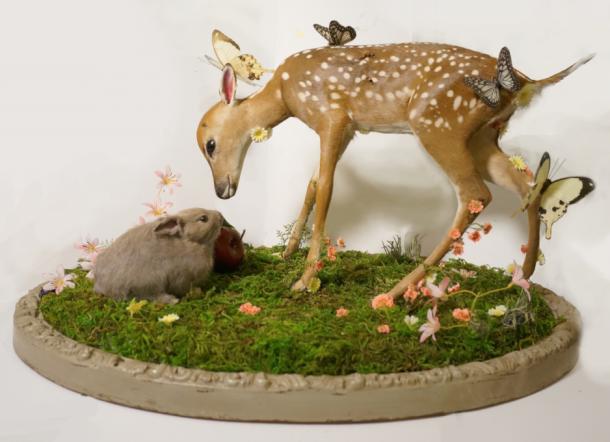 Bambi (still born deer)